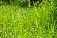 Cierre verde claro del prado para arriba Imágenes de archivo libres de regalías