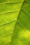 Cierre verde de la hoja encima de la macro Foto de archivo libre de regalías