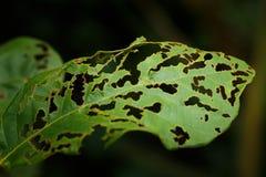Cierre verde de la mordedura de insecto de hoja para arriba imagen de archivo libre de regalías