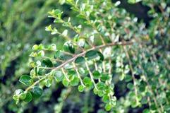 Cierre verde de la ramita encima de la foto Foto de archivo libre de regalías