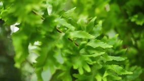 Cierre verde del arbusto para arriba Fondo abstracto de la naturaleza Hojas verdes almacen de metraje de vídeo