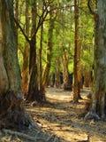 Cierre verde del bosque para arriba Foto de archivo libre de regalías