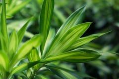 Cierre verde del fondo de las hojas para arriba Fotografía de archivo