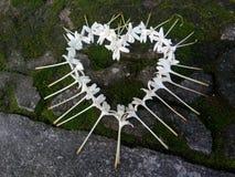 Ciervo de la flor Imagen de archivo