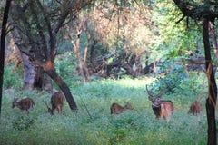 5 ciervos imágenes de archivo libres de regalías