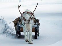 Ciervos Foto de archivo libre de regalías