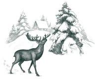 Ciervos Imagen de archivo libre de regalías