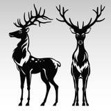 Ciervos blancos y negros Imagen de archivo libre de regalías