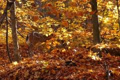 Ciervos camuflados Imagenes de archivo