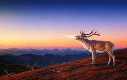 Ciervos comunes. Fotografía de archivo libre de regalías