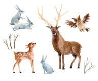 Ciervos con el cervatillo, conejos, pájaros de la acuarela aislados en el fondo blanco Foto de archivo