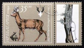 Ciervos de huevas y escopeta, expo 81 del ` de la serie, cazando el `, circa 1981 Imágenes de archivo libres de regalías