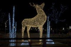 Ciervos de la iluminación Fotos de archivo