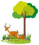 Ciervos de la madre y pequeño cervatillo en bosque ilustración del vector