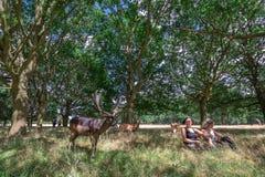 Ciervos de la reunión en Richmond Park fotos de archivo libres de regalías
