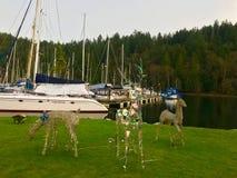 Ciervos de los barcos de Marnie de la isla de Bowen imágenes de archivo libres de regalías