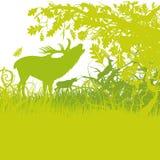 Ciervos del rugido stock de ilustración