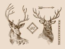 Ciervos dibujados mano Fotos de archivo