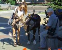 Ciervos en el cuadrado de ciudad en el tiempo de verano imagen de archivo
