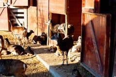 Ciervos en el parque zoológico foto de archivo libre de regalías