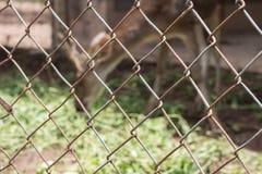 Ciervos en jaula Fotografía de archivo libre de regalías