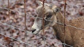 Ciervos en la cerca almacen de metraje de vídeo