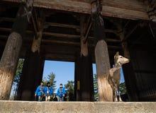 Ciervos en la entrada al templo de Todaiji Imágenes de archivo libres de regalías