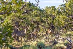 Ciervos en luz de la mañana en el bosque Fotografía de archivo libre de regalías