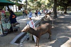Ciervos en Nara Park Fotos de archivo