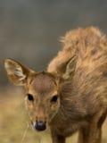 Ciervos en parque zoológico Foto de archivo libre de regalías