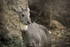 Ciervos en parque zoológico Fotos de archivo