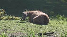 Ciervos en un parque almacen de metraje de vídeo