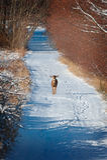 Ciervos en una carretera nacional Nevado Fotografía de archivo
