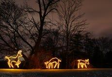 Ciervos iluminados Imagen de archivo