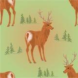 Ciervos jovenes de la textura inconsútil en el vector del bosque Imágenes de archivo libres de regalías