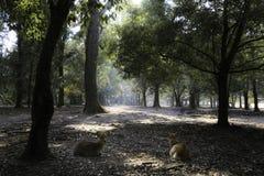 Ciervos que mienten en el corazón profundo del bosque Fotografía de archivo