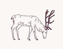 Ciervos, reno o macho masculino pastando en la mano del pasto dibujada con las l?neas de contorno en fondo ligero Dibujo decorati stock de ilustración
