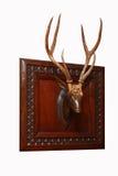 Ciervos y claxones Imagen de archivo libre de regalías