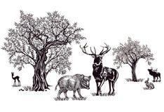 Ciervos y jabalí ilustración del vector