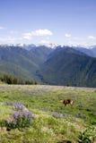 Ciervos y montañas fotografía de archivo