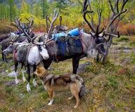 Ciervos y perro imagen de archivo libre de regalías