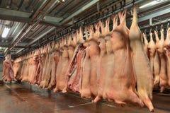 Ścierwa wieprzowiny obwieszenie od haczyków w zimnym sklepie Zdjęcie Stock