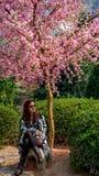 Cieszyć się Sakura Zdjęcie Stock