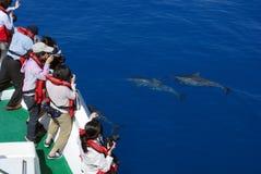 Cieszy się wielorybiego tun fotografia royalty free
