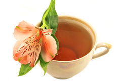 cieszy się smaku kwiatu Obraz Royalty Free