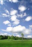 Cieux bleus et arbres verts Photos libres de droits