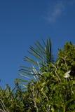 Cieux bleus et feuillage vert sain d'une île des Caraïbes Photo stock