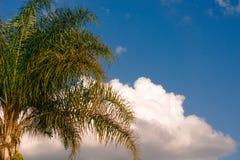 Cieux bleus et palmiers Photographie stock libre de droits