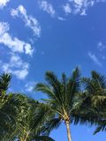 Cieux du sud de la Floride Photos libres de droits