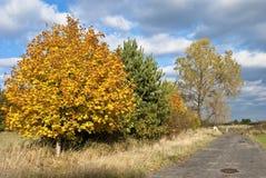 Cieux et arbres d'Authumnal Images stock